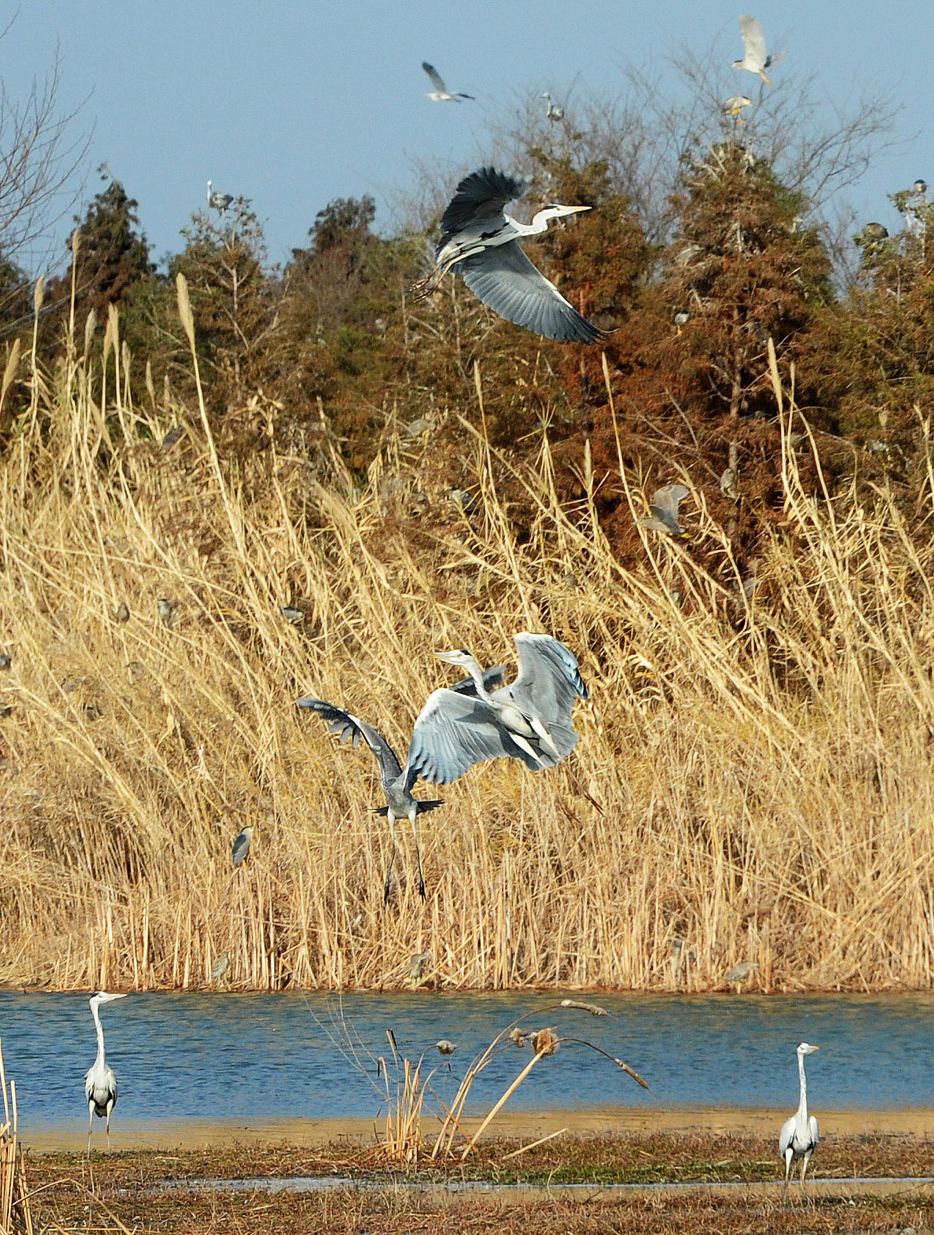 候鸟观鸟web3.jpg